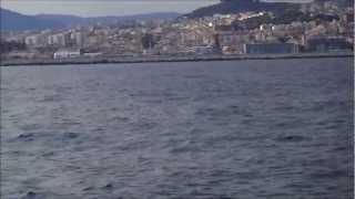 preview picture of video 'Delfines en Mataró! 19.9.12.  HD'