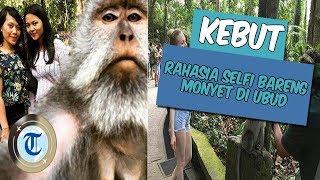 KEBUT: Rahasia di Balik Foto Selfie Bareng Monyet di Bali yang Viral di Medsos