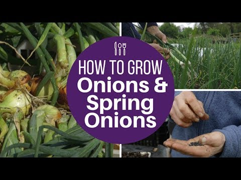 , title : 'Grow onions and spring onions from seed, for large harvests of high quality