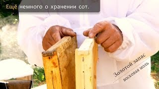 Смотреть онлайн Как пчелиные хранить соты от моли
