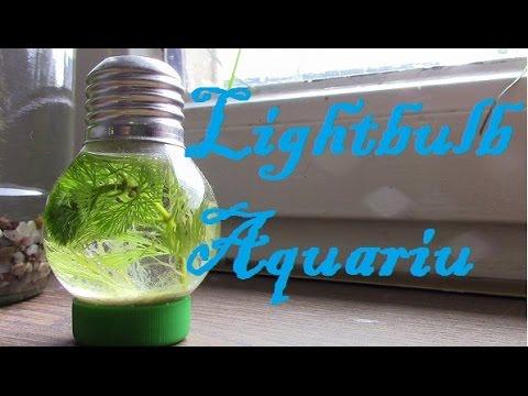 Mini-Aquarium in der Glühbirne - Erschaffe deine kleine Unterwasser-Welt