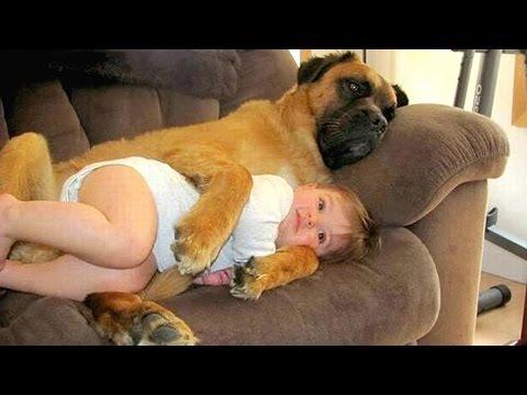 כשתינוקות קטנים וכלבים גדולים נפגשים, קורים דברים מדהימים...