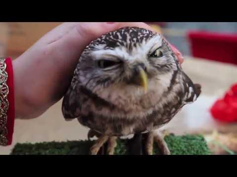 Что будет, если погладить сову?