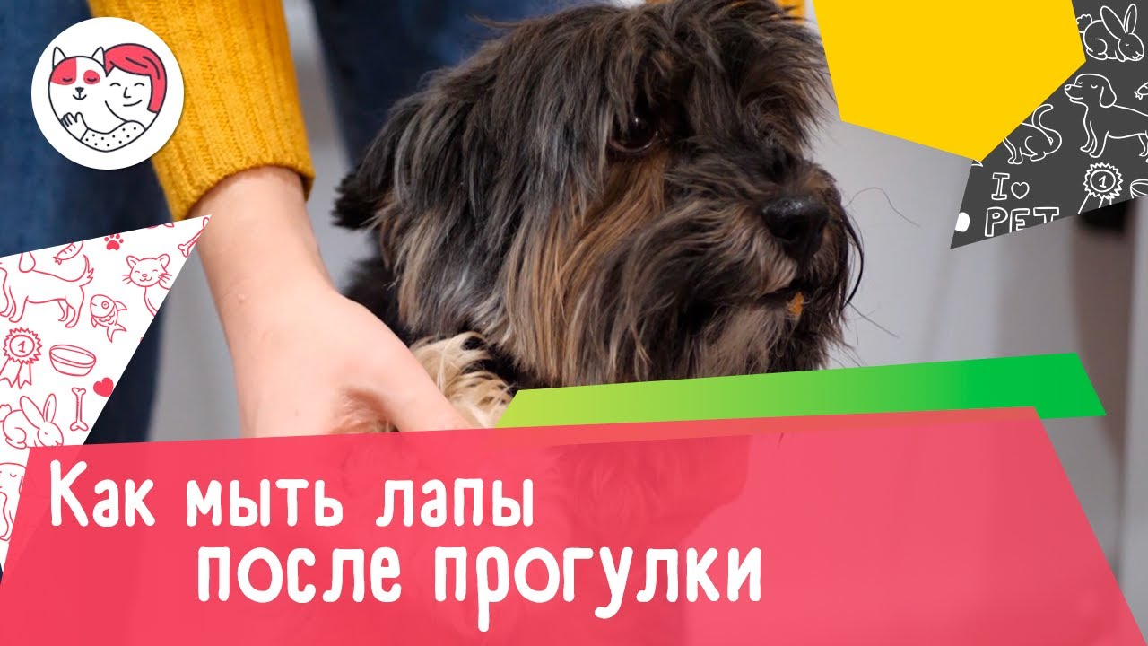 Как правильно мыть лапы собаке после прогулки: видеоинструкция