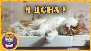 Рыжик возвращается из Москвы домой в Алматы. Обратная дорога