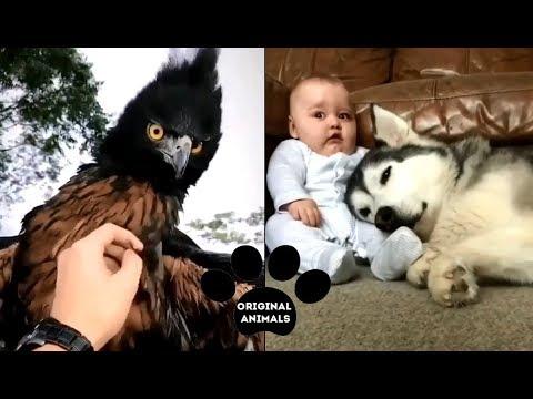 Original Animals #6. CUTE AND FUNNY ANIMALS VIDEO/ МИЛЫЕ И СМЕШНЫЕ ЖИВОТНЫЕ.
