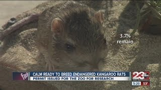 CALM ready to breed endangered kangaroo rats