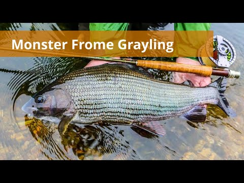 Fly Fishing for Record Breaking Grayling