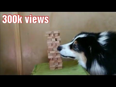 Σκύλος παίζει Jenga
