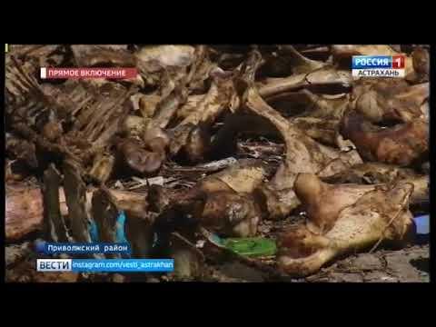 О несоблюдении требований при утилизации биологических отходов в Астраханской области