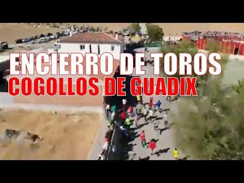 😱 ESPECTACULAR Encierro de toros a vista de drone | COGOLLOS DE GUADIX 2019