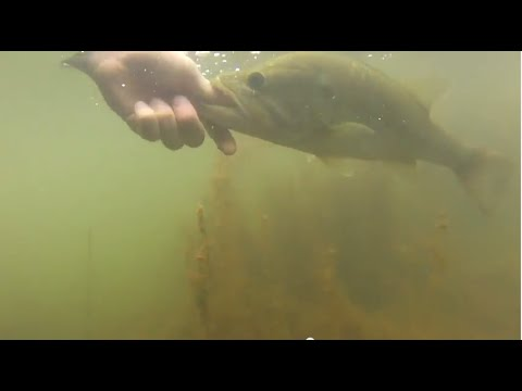 Farm Pond Bass Fishing / Pop-rs and Worms