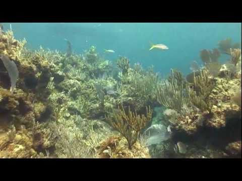 Tauchen waehrend der Sharkschool im Mai 2010, Shark School,Bahamas