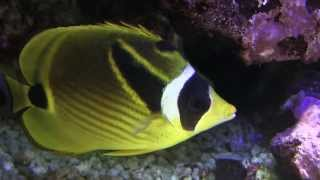 preview picture of video 'Marine Aquarium - Coral reef - Zoo in Lodz Poland 2013'