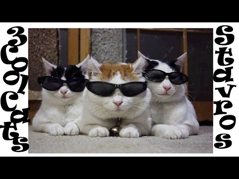 Three Cool Cats, Stavros, Coasters, Cover, 3 Cool Cats - Lyrics