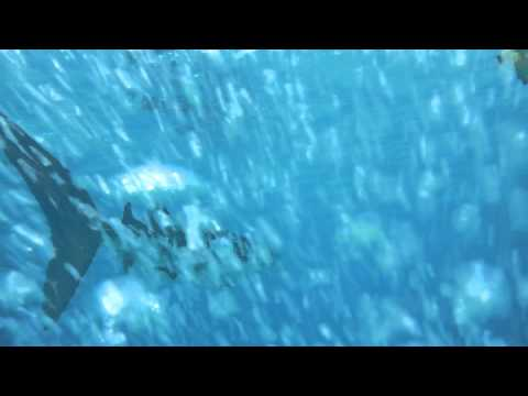 Mein 1. Walhai:, Süd Ari Atoll - Orimas Faru,Malediven