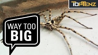 10 Giant Invertebrates You Don't Want to Meet