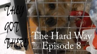 From the UK to Malta...by plane..with dogs! Episode 8