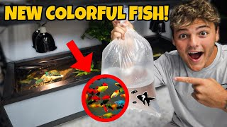 BUYING FISH for My 120G indoor BABY TURTLE POND!!