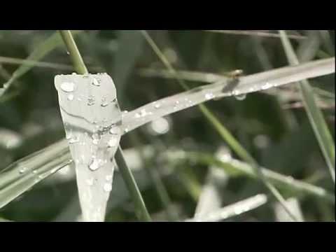 Анализы на гельминтов инвитро