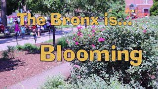 The Bronx is Blooming