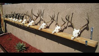HOW TO CLEAN A DEER  SKULL GRAPHIC EASY PROFFESIONAL EUROPEAN METHOD )
