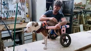 איך להכניס את הכלב לכסא הגלגלים