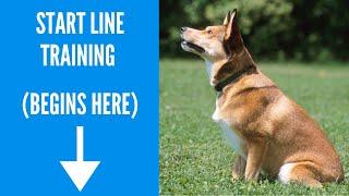Dog Agility Start Line Training - Lisa Selthofer