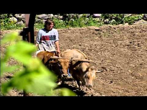 Le suore in Albania con i poveri