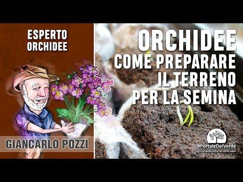 Come preparare il terreno di coltura per seminare le orchidee