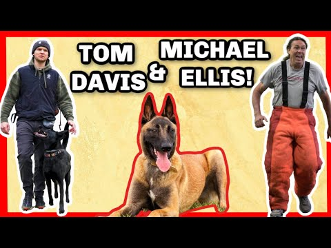 HOW TO BECOME A PROFESSIONAL DOG TRAINER WITH TOM ...