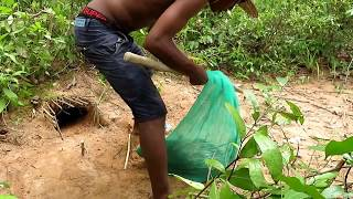 How To Catch A Porcupine - Survival Technology: Awesome Quick Porcupine Trap Using Nets