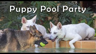 Puppy Pool Party - Please Subscribe