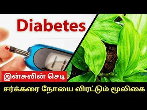 Medicamente pentru tratamentul diabetului zaharat eseu