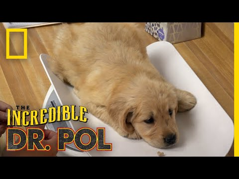 Puppies Get a Check-up | The Incredible Dr. Pol