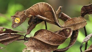 10 Most INSANE Camouflage In The World!