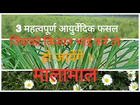 Download Herb Farming Video 3GP Mp4 FLV HD Mp3 Download - TubeGana Com