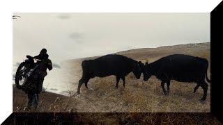 Battle Of The Cattle! - Ranch Rodeo Calving Season Part 1 - Jordan Johnson