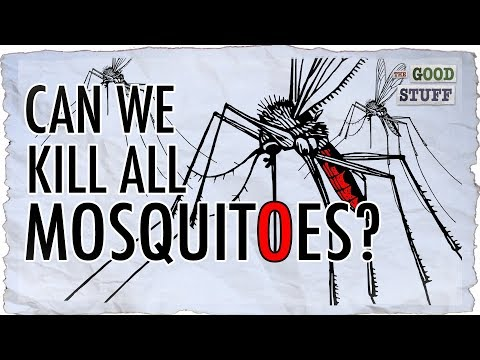 Should Mosquitoes Be Made Extinct?