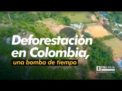 Deforestación en Colombia, una bomba de tiempo