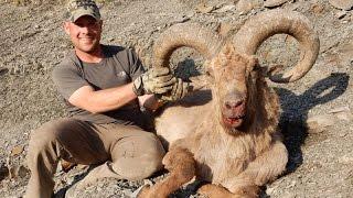 Dagestan Tur hunting Azerbaijan 2015 - Ismaily AREA!