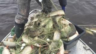 Рыбалка на иртыше 2015 сам в шоке
