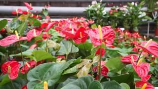 Свежие цветы в Алматы и Астане