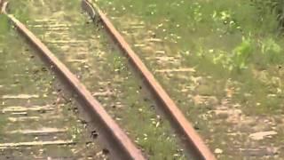 Draisinenfahrt in Schweden