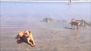 Agua Calientes (hot springs on the beach!) Punta Banda, Baja California Mexico
