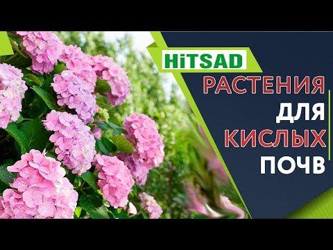 Растения которые ОЧЕНЬ Любят Кислые Почвы 🌺 Цветы для кислой почвы 🌺 Советы От Хитсад ТВ