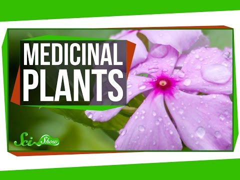 Video 4 Plants That Are Great for Humans