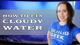 How to Fix Cloudy White Aquarium Water