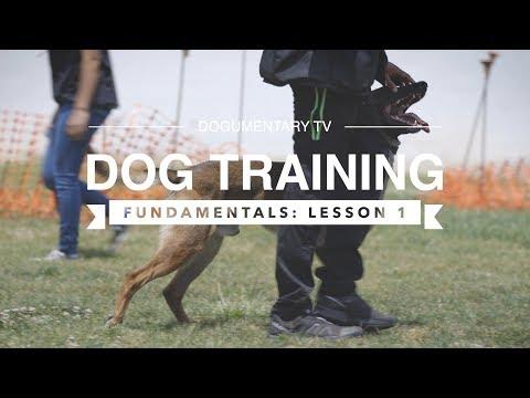 DOG TRAINING FUNDAMENTALS: LESSON 1