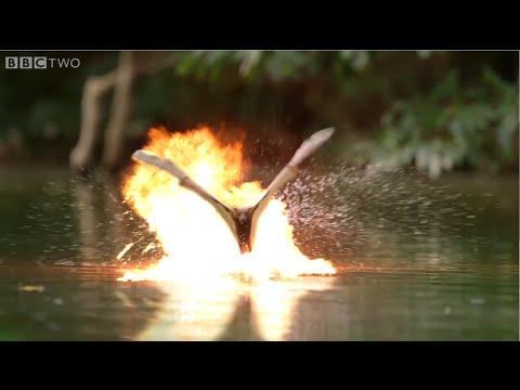 【哥吉拉?!】加了特效的鱷魚與蝙蝠大戰好熱血!